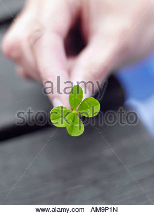 A woman's hand holding a four leaf clover. - Stock Photo