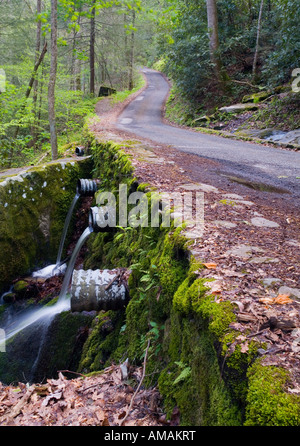 Empty road through wooded area - Stock Photo