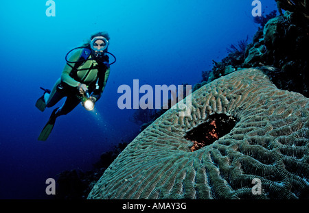 Scuba diver and coral reef Saint Lucia French West Indies Caribbean Sea - Stock Photo