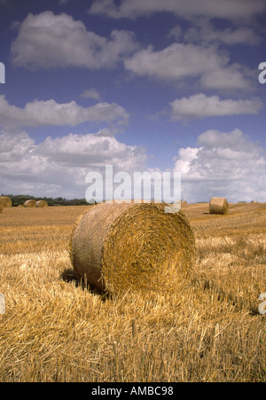 Hay Bales in a field - Stock Photo