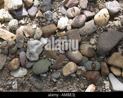 stone plant (Lithops spec.), hideen between stones - Stock Photo