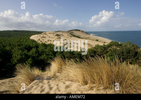 Sand dunes advancing into pine forest in Dune du Pyla overlooking the Bassin d Arcachon south of Bordeaux France - Stock Photo