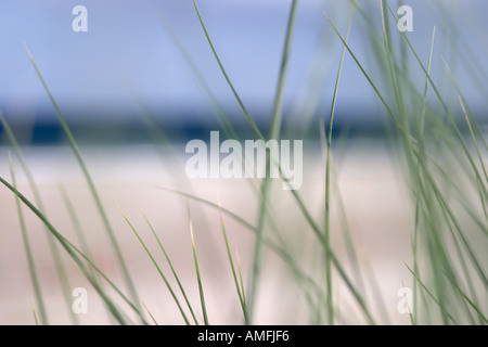 landscape shot showing close up detail of beach grass with sand sea and sky out of focus in the background - Stock Photo