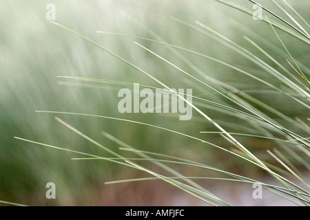landscape shot showing close up detail of beach grass with shallow focus - Stock Photo
