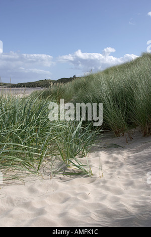 Portrait shot showing close up detail of beach grass with sand sea and sky out of focus in the background - Stock Photo