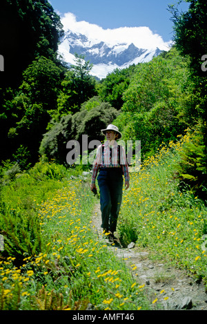 Hiking through wildflowers on the trail to the ROB ROY GLACIER WANAKA region SOUTH ISLAND NEW ZEALAND - Stock Photo