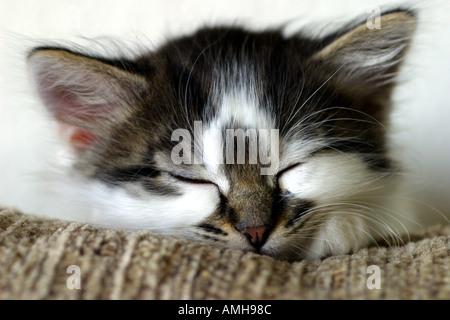 Kitten sleeping on a sofa - Stock Photo