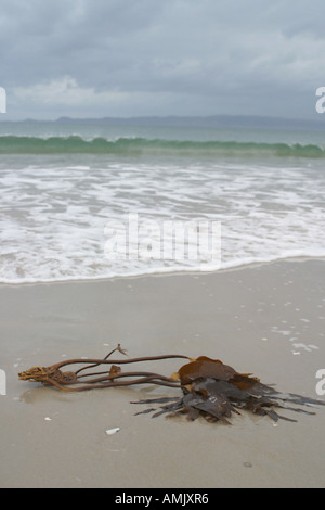 A Stock Photograph of A Beach in Scotland with Seaweed in the Foreground - Stock Photo