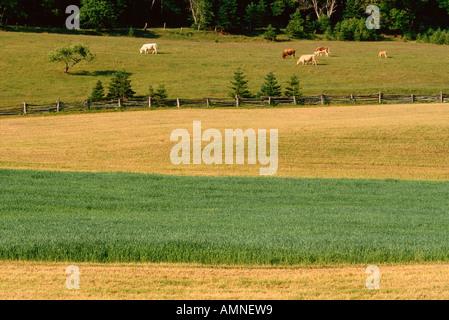 Farm in Central Hampstead, New Brunswisk, Canada - Stock Photo
