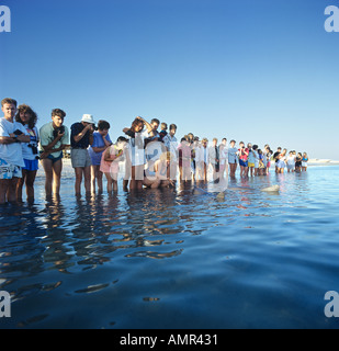 Australia dolphin watching many people standing in a row in the water taking pictures - Stock Photo