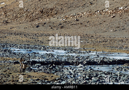 Two villagers lost in a valley of rocks and boulders carry baskets towards a stone river bridge Tibet - Stock Photo
