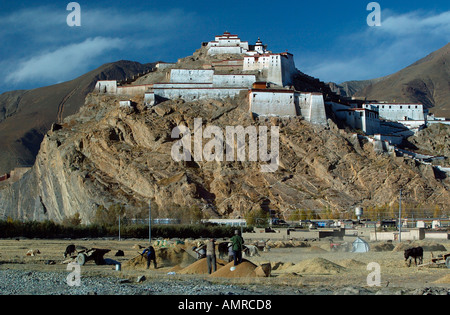 Harvesting barley below the Gyantse Dzong one of the best preserved forts in Tibet - Stock Photo