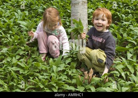 MR Mädchen und Junge pflücken im Wald Bärlauch Baerlauch Allium ursinum Bärenlauch MR girl and boy are picking ramson - Stock Photo