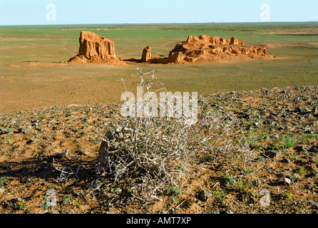Dried bush of Tumbleweed and erosion formations of brown sedimentary minerals. Bayan Zag, South Gobi desert, Mongolia - Stock Photo