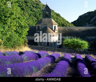 FR - VAUCLUSE: Abbaye Notre Dame de Senanque near Gordes - Stock Photo
