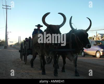 Silhouette of a traditional mennonite eines traditionellen mennonitischen oxen cart at the dawn in the Mennonite - Stock Photo