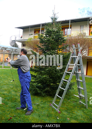 positioning of a christmas tree, man placing fairy lights at a christmas tree, Germany - Stock Photo