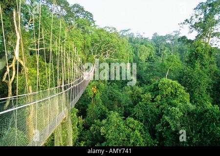 Canopy walkway, Kakum National Park, Ghana - Stock Photo