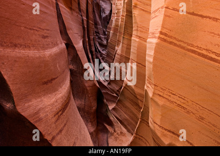 Zebra Slot Canyon detail Hole In The Rock Road region Grand Staircase Escalante National Monument UTAH - Stock Photo