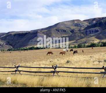 MARES AND FOALS GRAZING ON WIND RIVER INDIAN RESERVATION WYOMING - Stock Photo