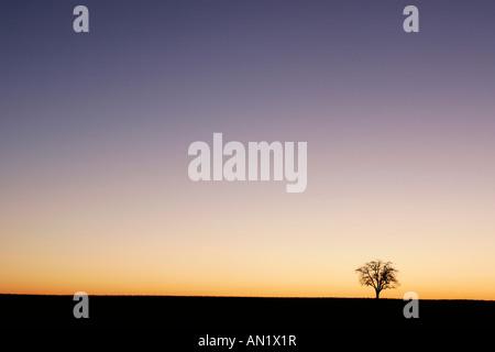 Baum im Sonnenaufgang - Stock Photo