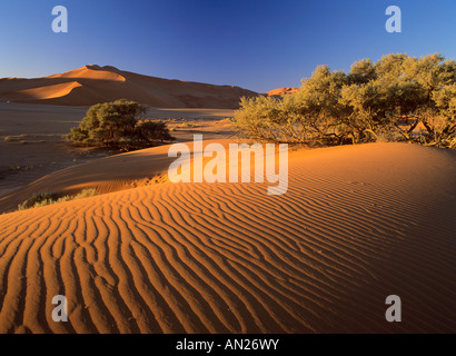 red dunes at Sossusvlei with sand ripples Namib Naukluft Park Namibia Africa - Stock Photo