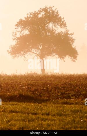 Baum auf einer Wiese bei Sonnenaufgang - Stock Photo