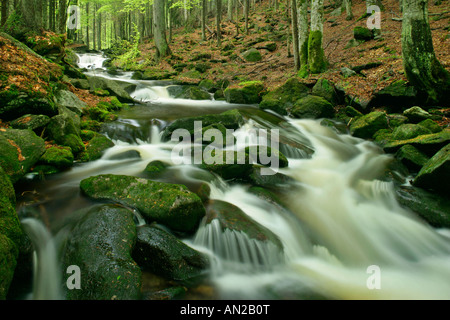 Stream with moss covered rocks in primeval forest Bavarian Forest National Park Bavaria Germany - Stock Photo