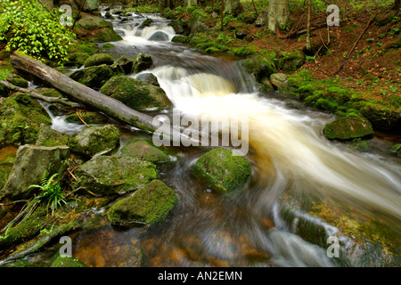 Deutschland Stream with moss covered rocks in primeval forest Bavarian Forest National Park Bavaria Germany - Stock Photo