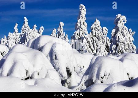 Baeume verschneit Nordschwarzwald Schwarzwaldhochstrasse Schliffkopf Winter Buehlertal Baden Wuerttemberg Germany - Stock Photo