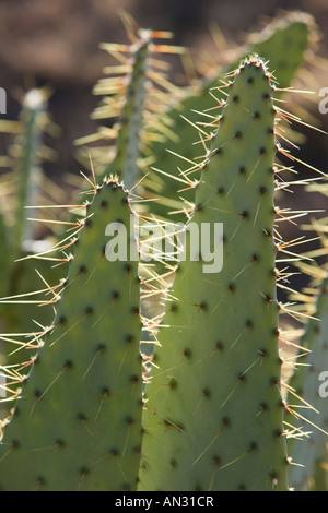 USA, TEXAS, Lubbock: National Ranching Heritage Center Cactus Detail - Stock Photo