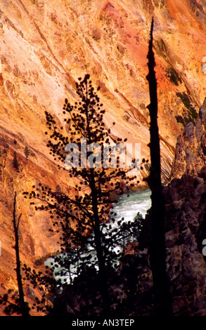 Yellowstone, Tree Silhouettes against the background of Yellowstone river at Artist Point - Stock Photo