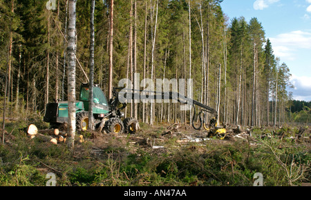 Forest cut down by a Timberjack forest harvester , Finland - Stock Photo