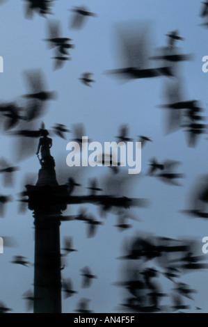 Pigeons flying in the sky Nelson s column Trafalgar Square London - Stock Photo