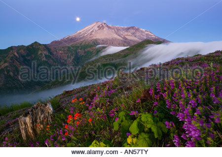 The full moon sets behind Mount St Helens, which is framed by a dramatic fog falls and blooming summer wildflowers. - Stock Photo