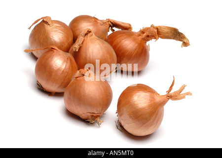 Shallots on white background - Stock Photo