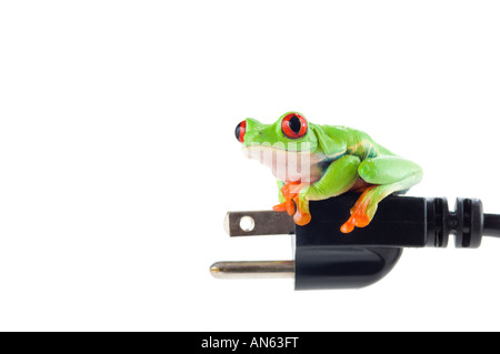 Red eyed tree frog on electrical cord - Stock Photo