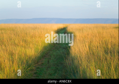 Path among tall grass on the savannah, Masai Mara, Kenya - Stock Photo