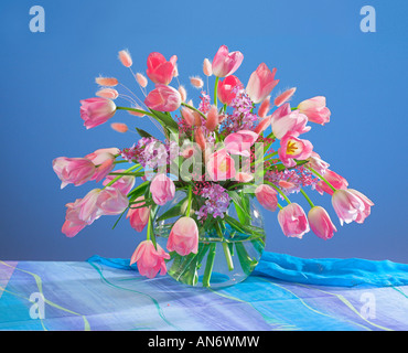 Studio arranged bouquet of pink tulips flowers in a vase on a blue pastel background - Stock Photo