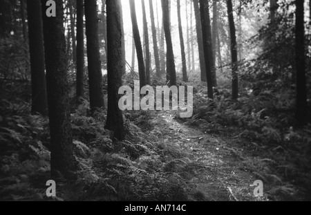 Surreal path through a forest - Stock Photo
