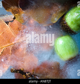 Frosty leaves in the New Forest - Stock Photo