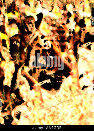 Hunting Tiger  Fine Art Image suitable for Environmental Tourism  Business or Sports Logo or as Dramatic Art - Stock Photo