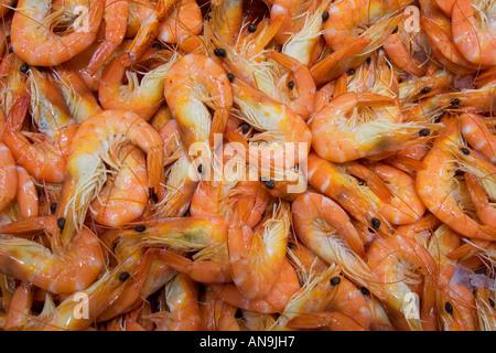 Cooked Tiger prawns for sale at Sydney Fish Market Darling Harbour Australia - Stock Photo