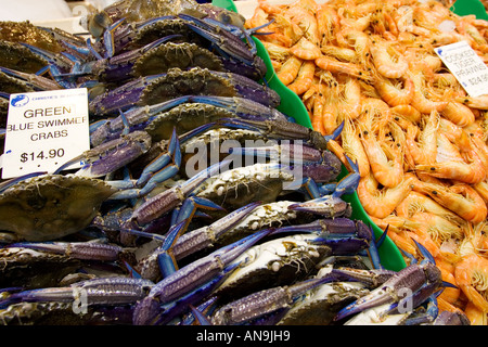 Green Blue Swimmer crabs and cooked Tiger prawns for sale at Sydney Fish Market Darling Harbour Australia - Stock Photo