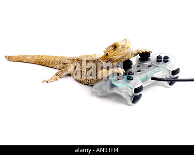 Bearded dragon with a playstation. - Stock Photo