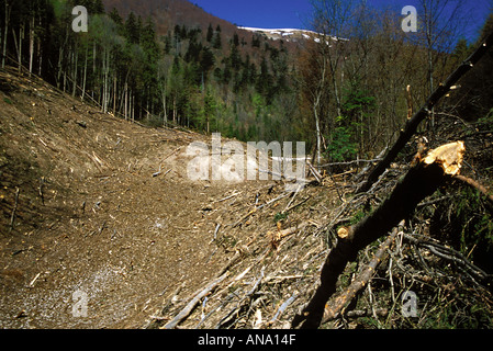 Avalanche path in Velka Fatra National Park mountains, Slovakia - Stock Photo