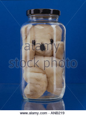 Stuffed bear in glass jar against a blue background - Stock Photo