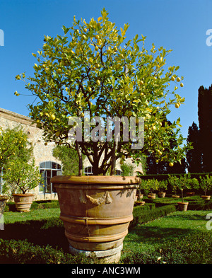 The formal Renaissance garden of Vicobello, Siena, Tuscany, Italy. The ancient lemon trees are moved indoors each - Stock Photo