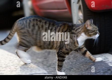Tabby cat walks under parked cars United Kingdom - Stock Photo
