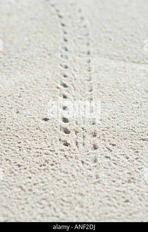 Bicycle tire track in sand, extreme close-up - Stock Photo